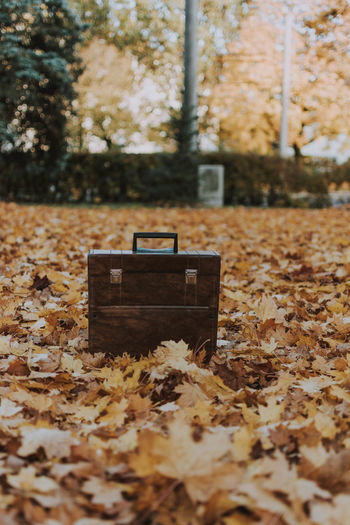 Suitcase on autumn leaves in park