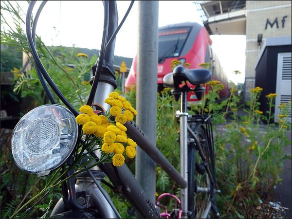 Beauty In Nature Bicycle Flower Transportation EyeEm Deutschland Rainfarn Fahrrad 🌟 Streamzoofamily Yellow Red Color Xperiaphotography IMography The Street Photographer - 2017 EyeEm Awards