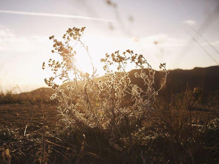 Perpetual Summer Desert Beauty Topanga State Park California Beauty Sunset Beauty Los Angeles, California Sunset