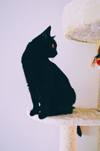 Animal Themes One Animal Bird No People Nature Close-up Pet Day Perching Mammal Black Fur Still Life High Contrast Profile View Black Cats Side View Kitten Domestic Animals Pets Black Color Black Domestic Cat Indoors  Curious Silhoutte