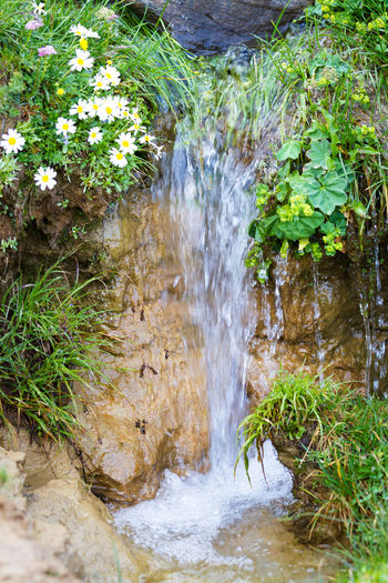 Water Motion Nature Plant Flowing Water Growth Flowing No People Day Beauty In Nature Outdoors Plant Part Leaf Solid Rock - Object River Forest Stream - Flowing Water Falling Water Running Water Spring Blossoms  Wild Flowers Clear Water