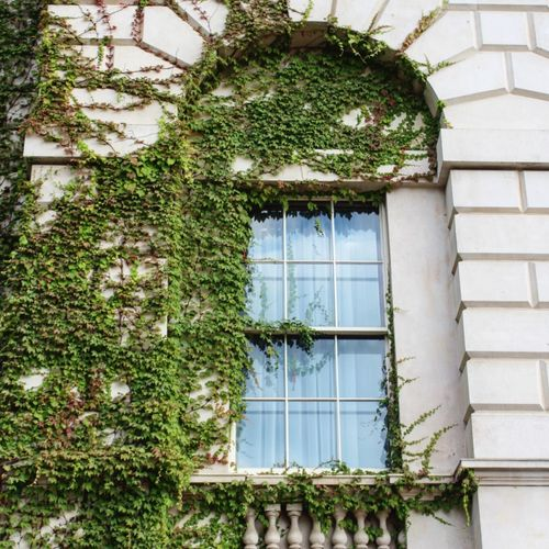 Architecture Growth Plant Window Built Structure Building Exterior Green Color Day No People Ivy Greenhouse Close-up Londononly London Architecture LONDON❤ London Photography London Calling! Beauty In Ordinary Things Beauty Is Everywhere