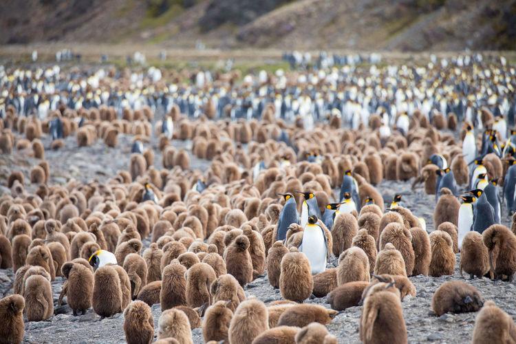 Flock of birds perching on landscape