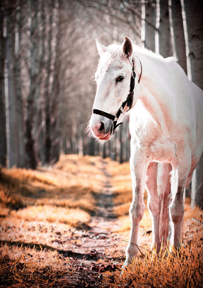 Horse standing on field by trees