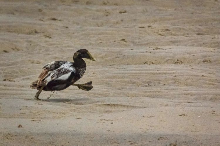 Cape Cod Duck Beach The Week On Eyem Showcase: March
