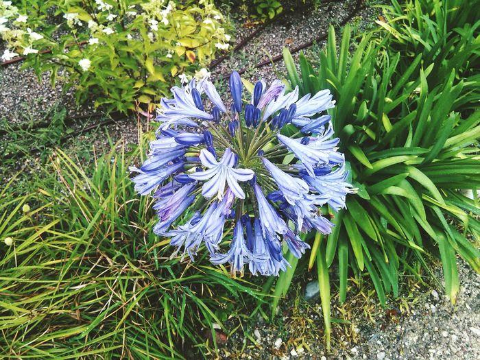 Flower Beauty In Nature Purple Nature Natura Natural Fiori!!! Varese Giardino Garden