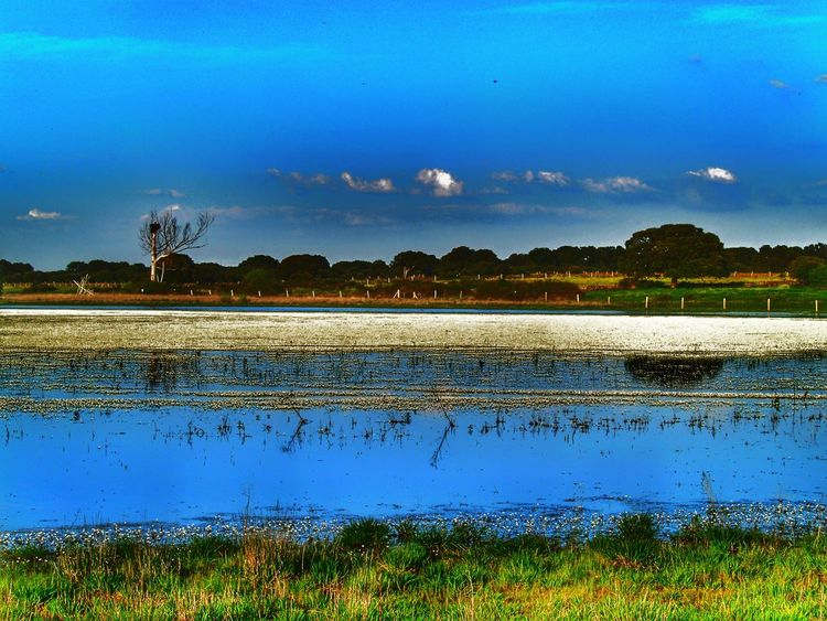 Landscape_Collection Water Reflections Beauty In Nature Dehesa Environment Forest Grass Lagoon Lagoon Water Lake Lake View Landscape Nature Outdoors Pasture, Paddock, Grassland, Pastureland River Scenics Spring Springtime Tranquil Scene Tranquility Water Water Flowers Water Reflection Waterfront