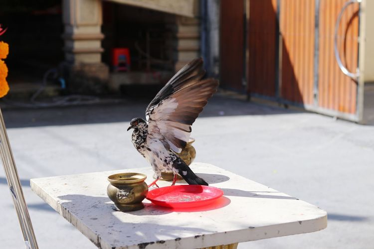 View of a bird on the table