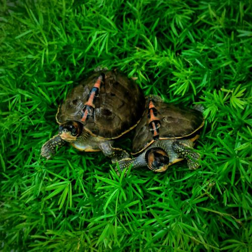 Animals In The Wild Grass Animal Themes Nature Green Color One Animal Animal Animal Wildlife No People Reptile Tortoise Outdoors Close-up Tortoise Shell Day Tortoiselife Tortoise Pet Pet Portraits