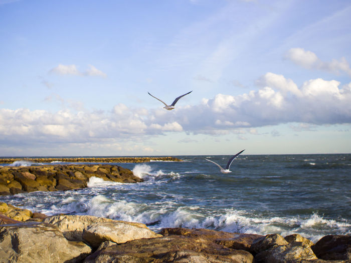 Sea Water Sky Flying Rock Vertebrate Bird Rock - Object Solid Animal Wildlife Animals In The Wild Animal Animal Themes Beauty In Nature Scenics - Nature Horizon Over Water Horizon One Animal Cloud - Sky No People Seagull