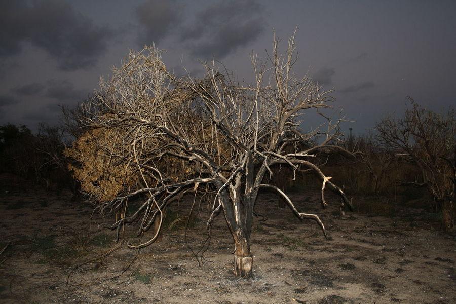 SPAIN Valencia, Spain València Bare Tree Beauty In Nature Day Devastation Fire Landscape Nature No People Outdoors Sky Tree