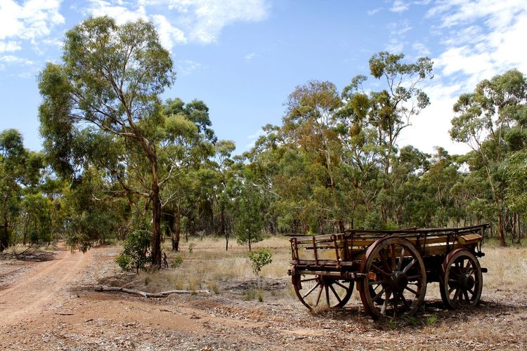 An abandoned wagon in the desert landscape of the Australian bush Australian Landscape Gum Trees Travel Photography Abandoned Arid Climate Arid Landscape Beauty In Nature Bushland Day Field Growth History Landscape Nature No People Outdoors Scenics Sky Tranquility Tree Wagon Wheel Wheel Wooden Wagon