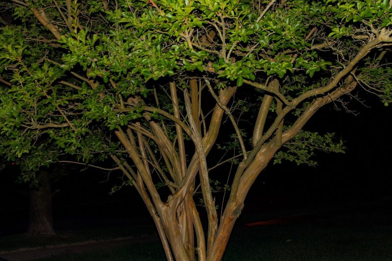 Grandmothers house Growth Tree Outdoors Canon_photos Canonphotography Canon Nature Plant Beauty In Nature Nightphotography Night