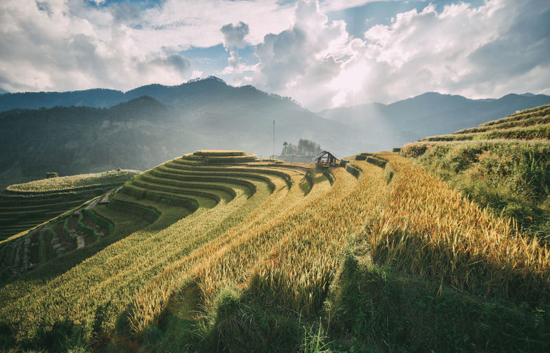 Terraced rice field at Sapa, Vietnam Mu Cang Chai Beauty Rice Field Terrace Beauty In Nature Cloud - Sky Environment Field Green Color Land Landscape Mountain Mountain Range Mu Cang Chai No People Rolling Landscape Sa Pa Sapa Terraces Scenics - Nature Sky Terraced Field Terraced Houses Terraced Rice Fields Tranquil Scene The Traveler - 2018 EyeEm Awards The Great Outdoors - 2018 EyeEm Awards