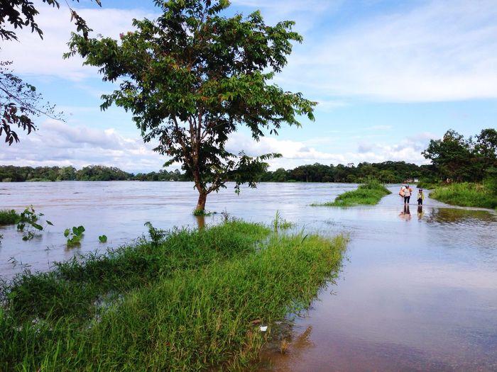 Jaras, Kapuas Hulu-Kalimantan Barat