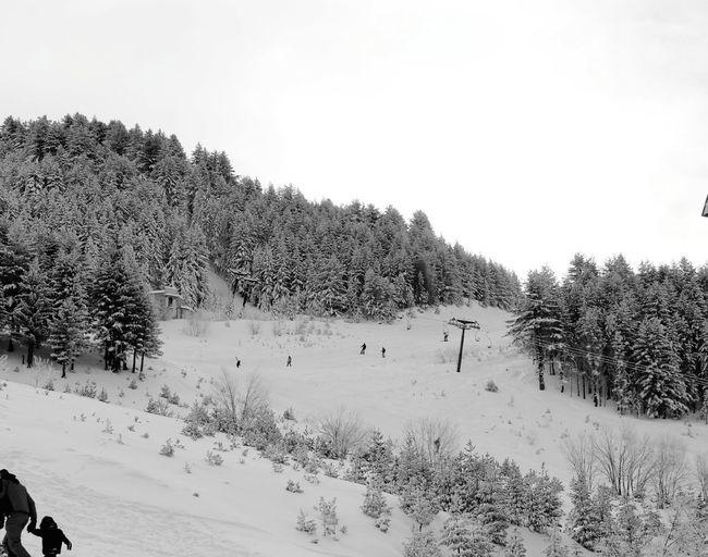 Blackandwhite Tree Snow Cold Temperature Winter Bird Sky Animal Themes