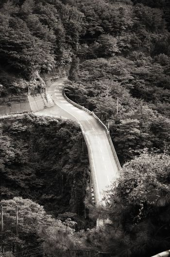 道 Road In The Mountains Taking Photos From Train Window Valley Side Trees Nature Road And Bridge Monochrome Black And White From My Point Of View Capture The Moment EyeEm Nature Lover EyeEm Best Shots EyeEm Best Edits EyeEm Best Shots - Black + White 山の中 大井川鐵道 列車旅 旅写真