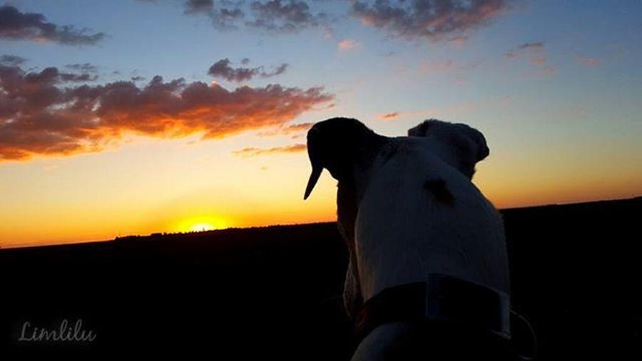 Yo creo que quien no tiene un animal que convive en casa día a día, no puede entender lo que muchos dueños sentimos por muestras mascotas... Neboa Misniñas Mifamiliaperruna Adoptanocompres Mascotas Galgos Greyhounds PonUnPerroEnTuVida PonUnGalgoEnTuVida Perros  Dogs Pets Perrosgram Petstagram Love Like Beautiful Bestoftheday EstaEs_Universal_4 Estaes_animal Estaes_de_todo Ke_animal Pets_of_our_world World_bestanimals Ir_Animal SinFiltro NoFilter Sunset Atardecer Valladolid