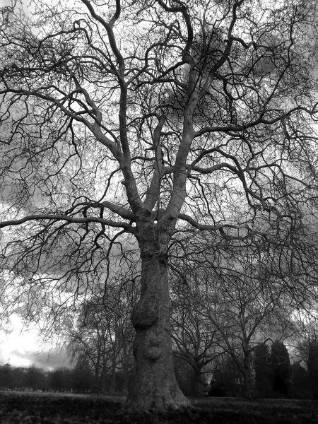 Bare Tree Beauty In Nature Branch Cloud - Sky Dark Day Growth Idyllic Landscape Nature No People Non Urban Scene Non-urban Scene Outdoors Remote Scenics Sky Tranquil Scene Tranquility Tree Tree Trunk