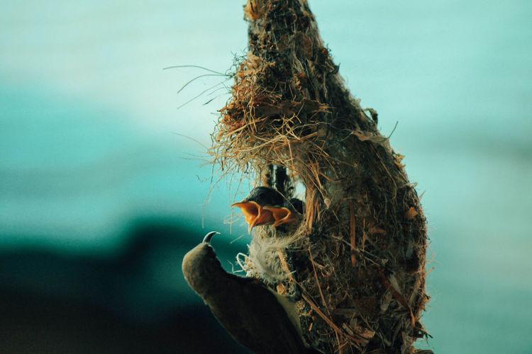 Close-Up Of Birds On Nest Against Blue Sky
