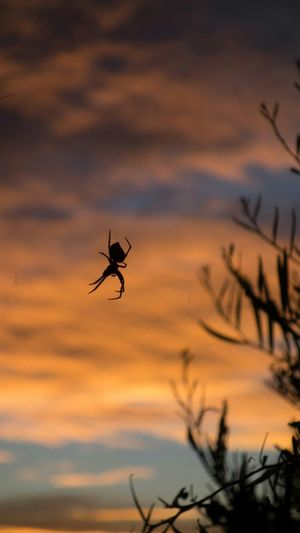 Climbing the sunrise in the desert. Spider Spiderweb Desert Life No Filter Ooc  Australian Outback Australia Down Under Australian Wildlife Spider Web Sunrise Sunrise... Wildlife & Nature Wildlife Wildlife Photography Red Centre From My Point Of View Taking Pictures Capture The Moment Light And Shadow Light Insects  Insect Insect Photography