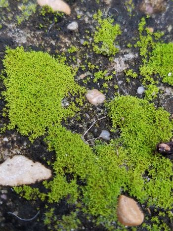 Beauty In Nature No People Nature Outdoors Beauty In Nature Growth Plant Moss