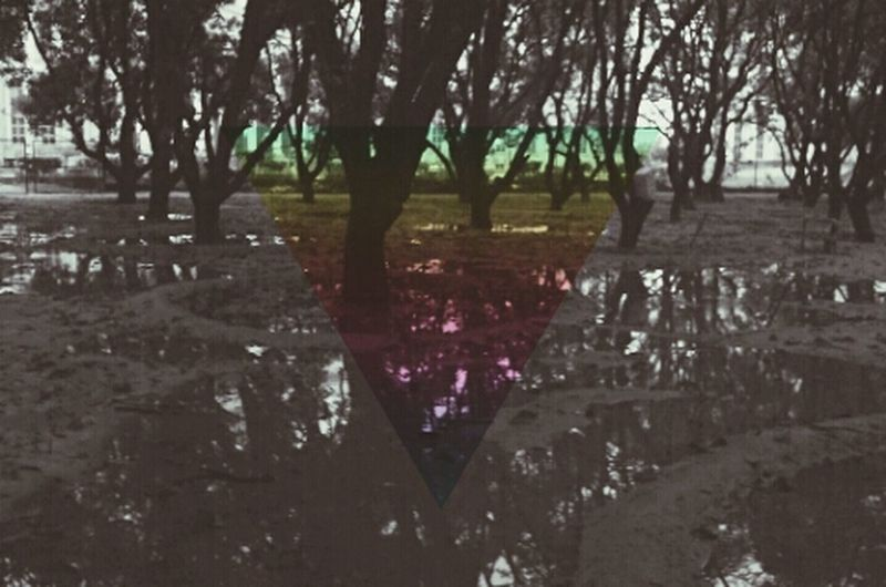 the Water Reflectionsof Trees and Woods Dailycandids