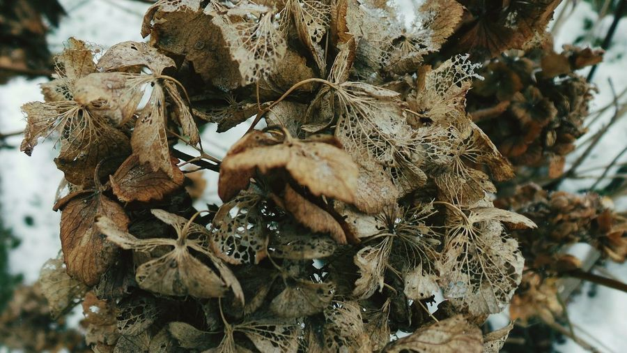 Nature No People Low Angle View Outdoors Leaf Close-up Macro Photography Pattern Abstract Nature Soft Fragility Abstract Photography Fragile Beauty Dried Flowers Beauty In Nature Textured  Ephemeral Macro_collection Backgrounds Textures And Surfaces Flowers,Plants & Garden Full Frame Winter Snow Vintage Filter