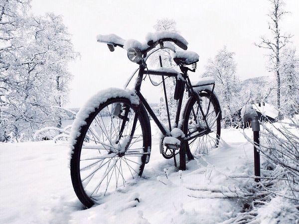 Forgotten Snow Winter Bicycle Beauty In Nature Wintertime Norway Winter Wonderland