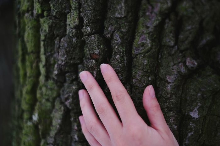 Skin contact. Hugging A Tree Green Trees Tree Skin Hand Contact Nature Natural Beauty Second Acts This Is My Skin