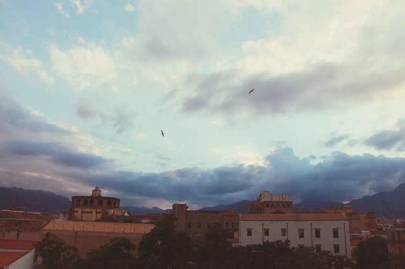 Traveling OpenEdit Sicilia Sky Birds Italy City Church Twilight Nightfall