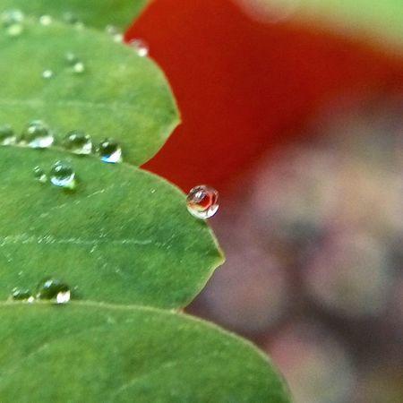 Nature Close-up Plant Growth Fragility Green Color Day No People Freshness Beauty In Nature Outdoors Splashing Droplet Freshness Plant Green Color Drop Primeroecuador Ecuadoramalavida AllYouNeedIsEcuador🌅🌊