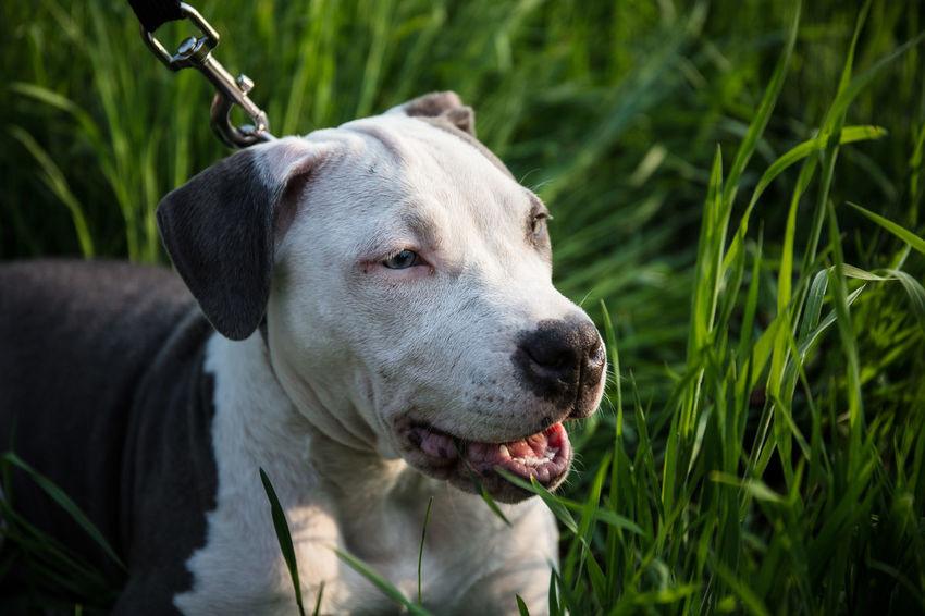 EyeEm Best Shots Frühlingserwachen Hunde Liebe ♡ Hundewelpenblick Staffordshire Waldspaziergang Hundefotografie Hundewelpen Staffordshire Bull Terrier Staffy Staffylove Stafordshire Bull Terrier