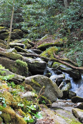 Smokey Mountain Waterfall Plant Nature Growth Day No People Beauty In Nature Tranquility Tranquil Scene Water Scenics - Nature Non-urban Scene Sunlight Rock Outdoors Tree Green Color Land Forest Rock - Object Flowing Water Summer Exploratorium