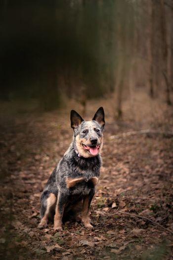 Portrait of a dog running on field
