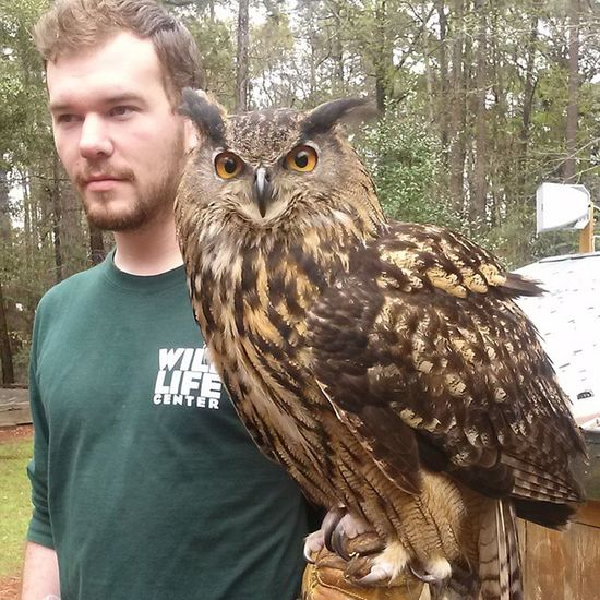 The Eagleowl is a beautiful bird and the guy is cute too ;)