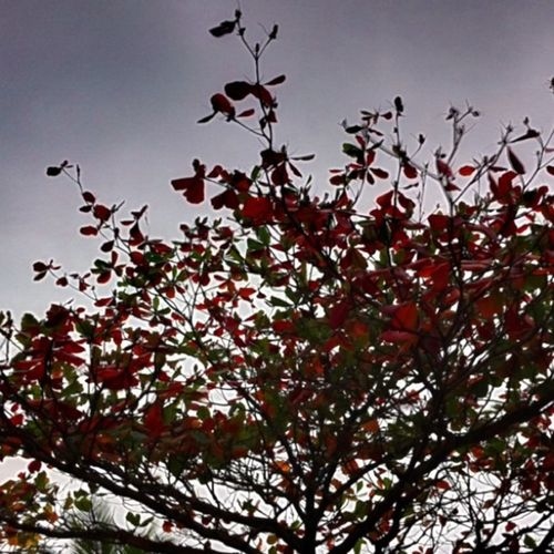 Grey day, red tree! Justnoe