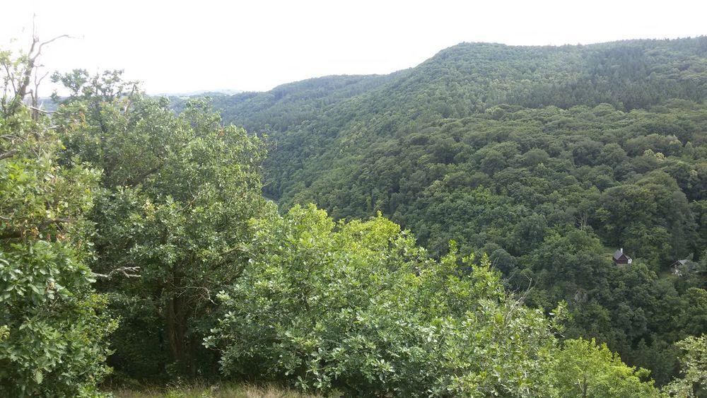 Czech forests Enjoying Life