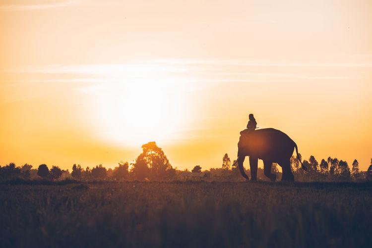 Silhouette man sitting on elephant against sky