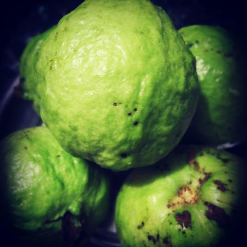 Freshly picked guava from tree. Nature Nature Photography Fruit Tree Fun Nice Moment
