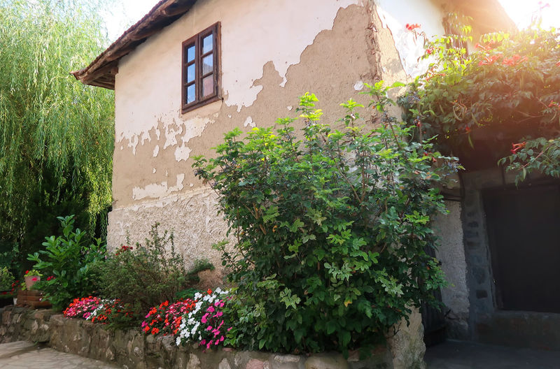 Old traditional Serbian house Retro Serbia Sunny Architecture Building Building Exterior Built Structure Ethno Flower Flowering Plant Garden House Lisine No People Old Peeling Off Plant Serbian Srbija Sunbeam Sunlight Traditional Village Wall - Building Feature Window