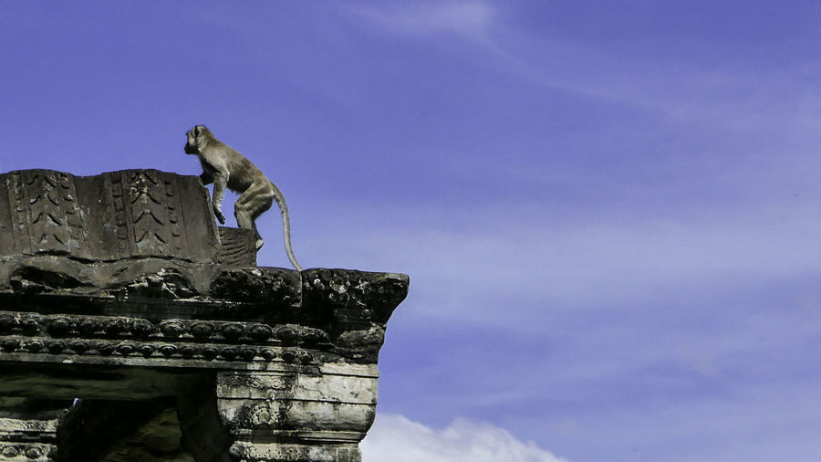 Low Angle View Of Monkey On Temple Against Sky