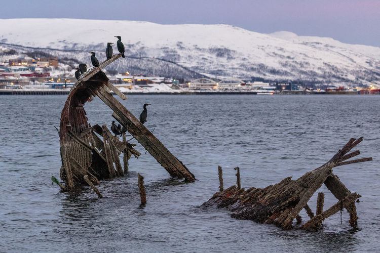 Birds on shipwreck in sea against snowcapped mountain