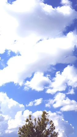 Beautiful Day Cloud - Sky Beauty In Nature Tree Low Angle View Sky Blue Nature Day Outdoors Treetop Tree And Sky Louisiana Beauty In Nature Louisianaphotography Louisiana Skies Eye Of Ky Cloud