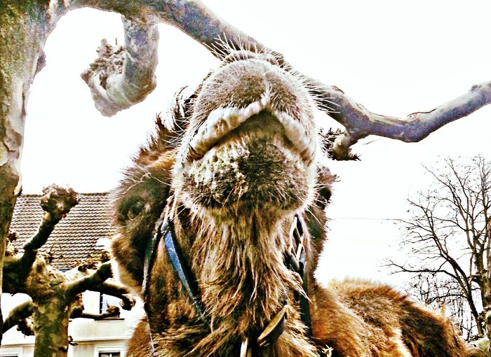 Mitten auf dem Marktplatz ... Mammal Animal Themes No People Outdoors One Animal Close-up Domestic Animals Day Tree New On Market New On Eyem
