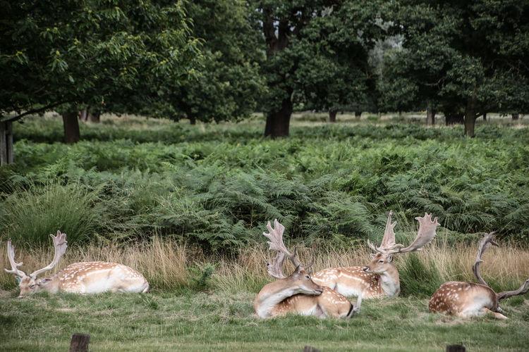 Deer Relaxing On Landscape