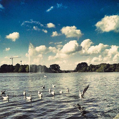 Auf Möwenpirsch... 😍💙🐦 Taking Photos Möwe Followme Hamburg Seagull Jungfernstieg Norddeutschland Hansestadt Photography Möwenleckerbissen