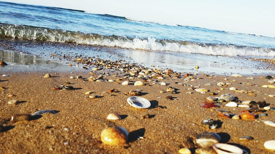 Sea Sea Shells Peaceful Sunrise her bir dalga gelip içimi huzura kavuşturur. .