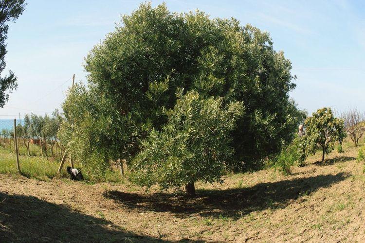Tree Countryside Tree_collection  Tree Seabackground Naturephotography Naturepower Hello World Green Green Green!