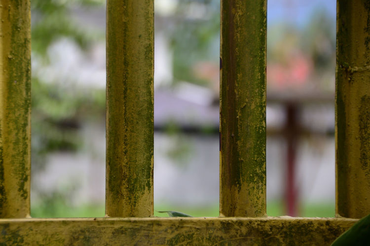 Old Gate Close-up Day First Eyeem Photo Focus On Foreground No People Old Old Gate, Outdoors Stainless Steel Gate Stainless Steel Gate Grill Yellow